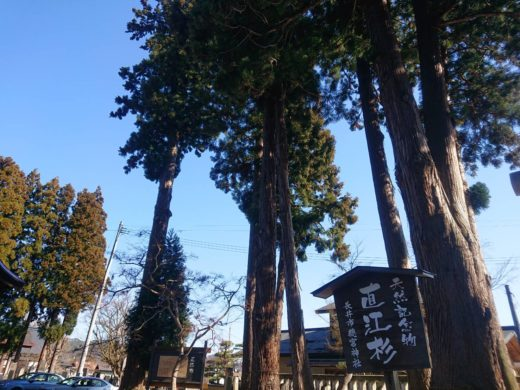 總宮神社の直江杉1
