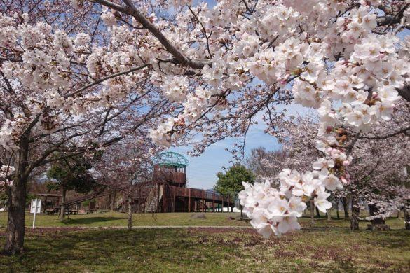 西公園の桜と遊具