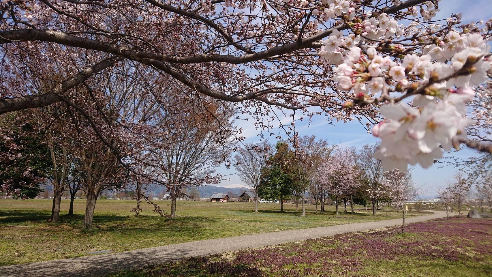 西公園の桜と月山