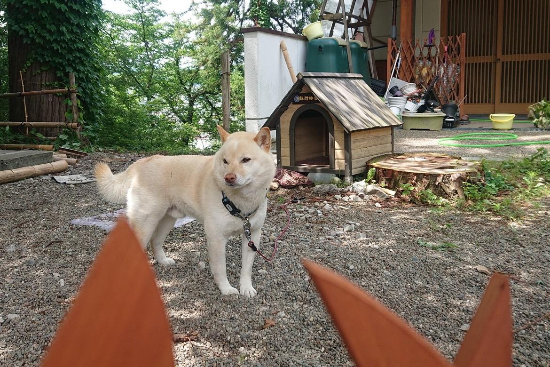 寒河江八幡宮のリアル狛犬2