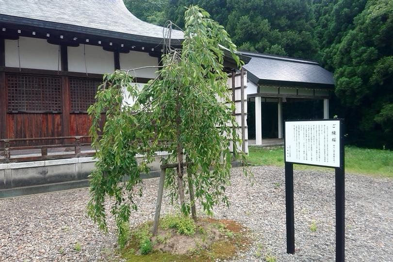 北舘神社のご縁桜
