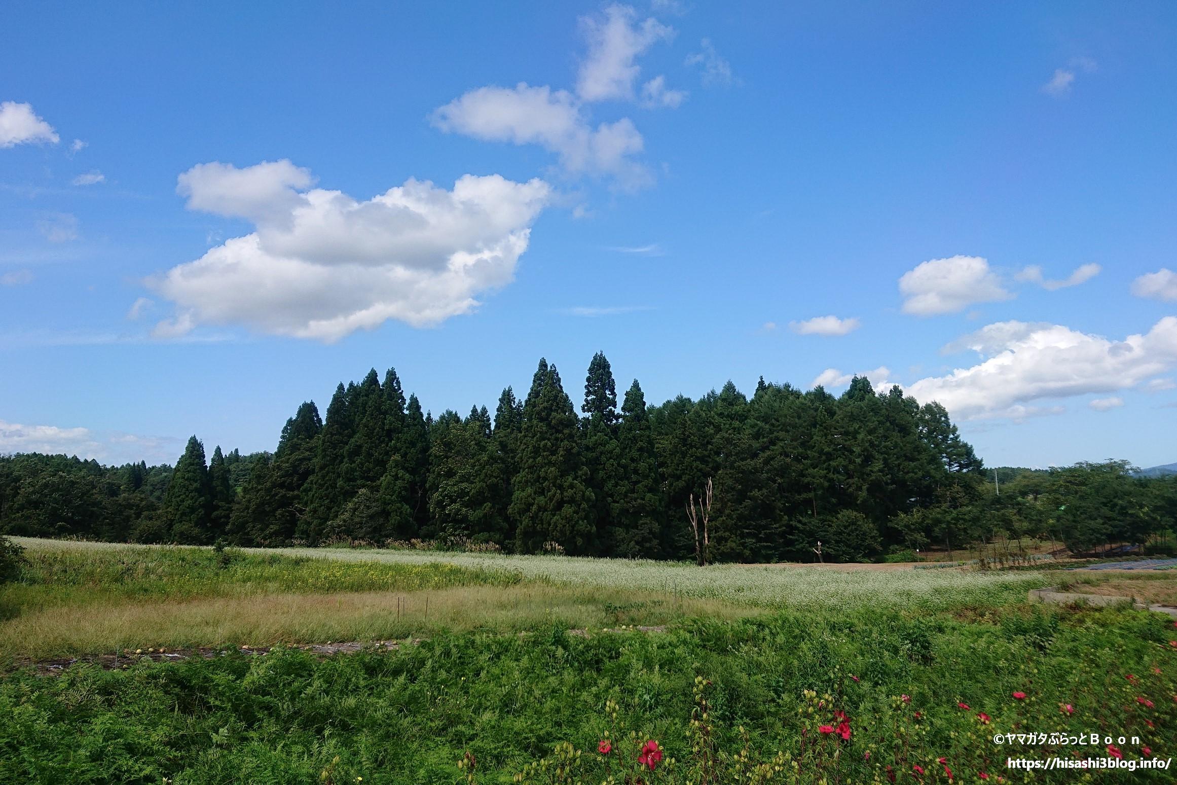 徳良湖温泉 花笠の湯のそば畑