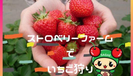 [寒河江市] ストロベリーファーム|雪中イチゴ狩り 6種の苺に大満足🍓