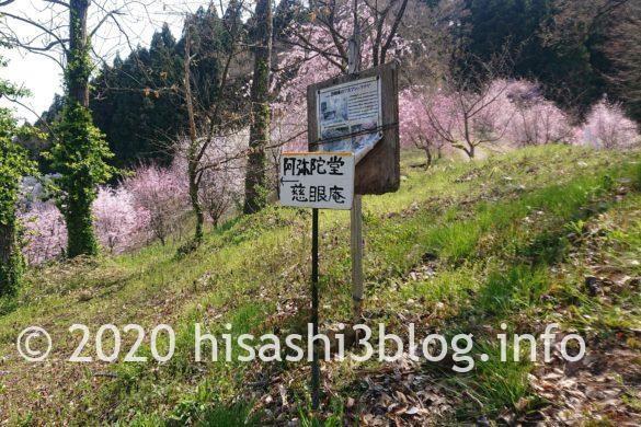 長谷堂城跡公園の桜2