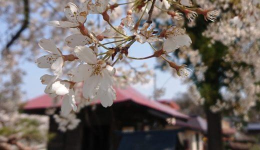 [山形市] 長谷堂城跡公園|400年の時を経て「花見の名所」へ🌸🍂