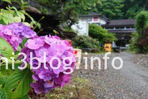 峠の茶屋 紫陽花