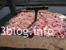 荘内神社 の手水舎2