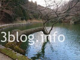 善寶寺 貝喰みの池5