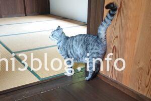 玉川寺の猫ちゃん2