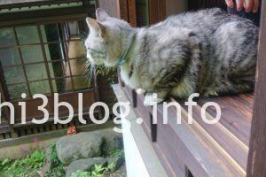 玉川寺の猫ちゃん3