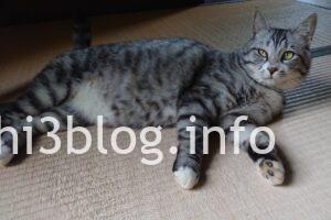 玉川寺の猫ちゃん4