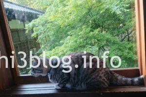 玉川寺の猫ちゃん5